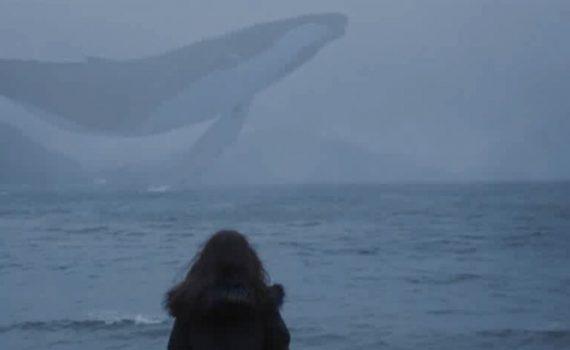 ویدئو نهنگ آبی