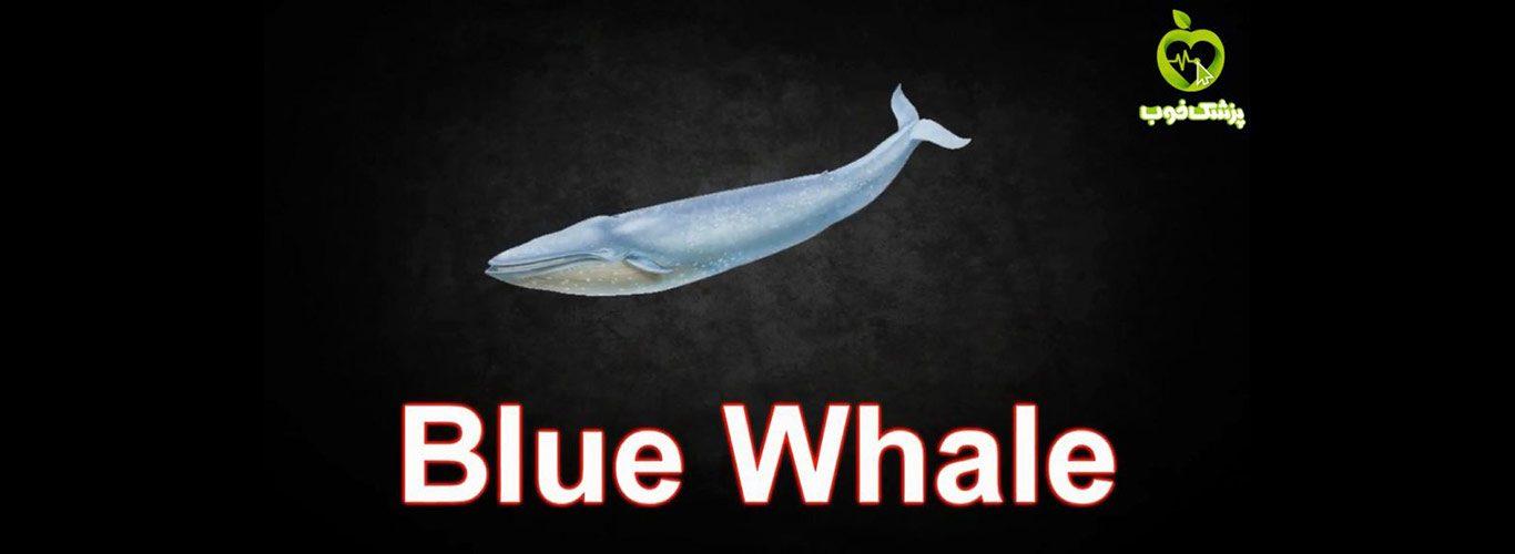 بازی نهنگ آبی