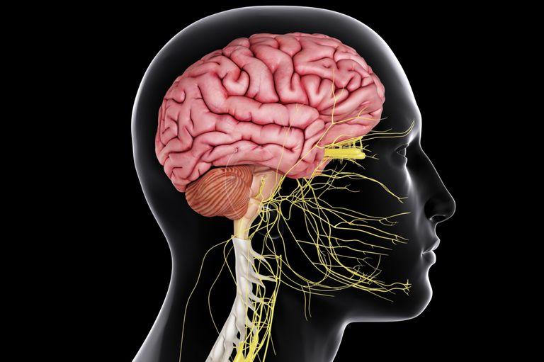 اعصاب محیطی و مرکزی